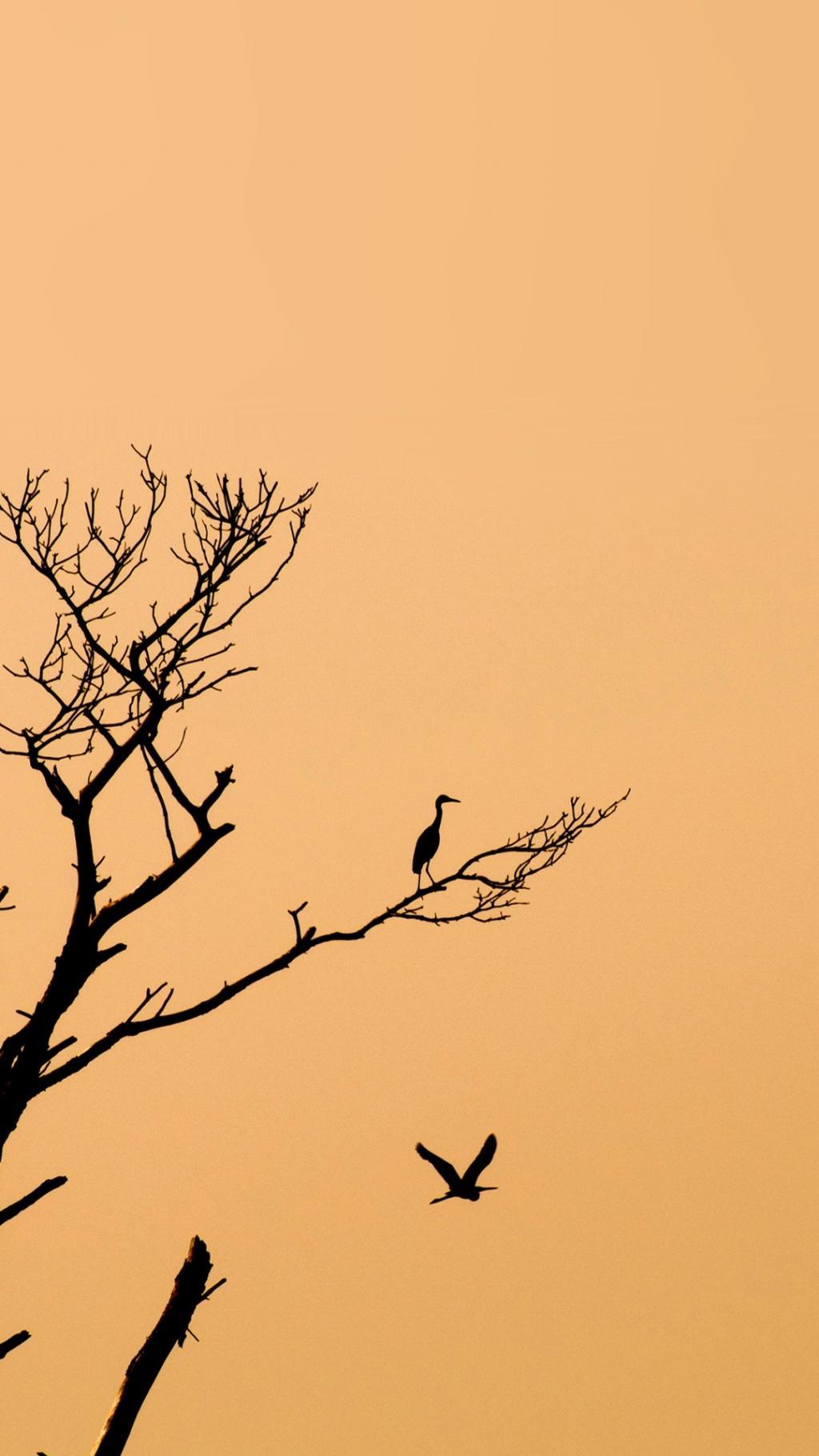 Galaxy Note 3 Hd Wallpaper 停栖在树上的鸟 锁屏图片 高清手机壁纸 动物 回车桌面