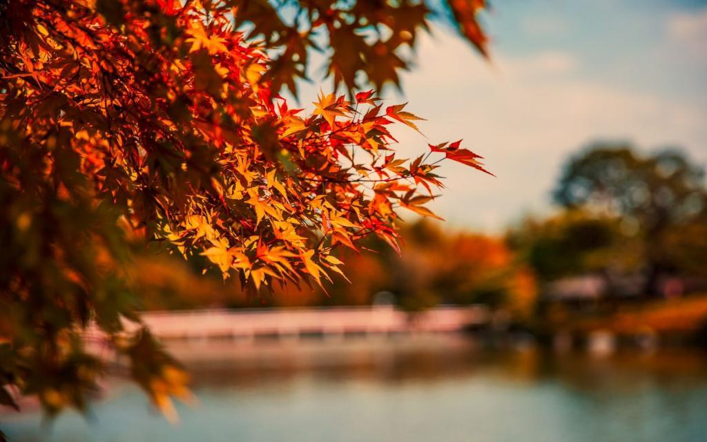 Fall With Water Wallpaper 意境之秋的美 高清壁纸 风景图片 回车桌面