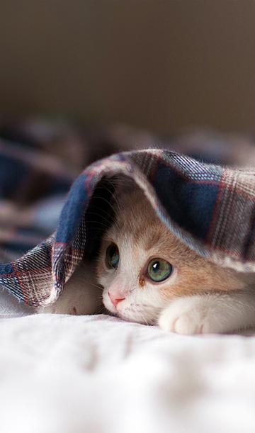 Cute Kittens Wallpaper For Iphone 可爱贵宾犬 锁屏图片 高清手机壁纸 动物 回车桌面