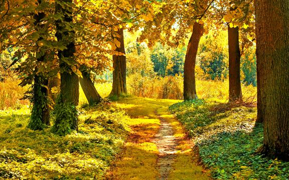 1680x1050 Fall Wallpaper 林中小道 高清壁纸 风景图片 回车桌面