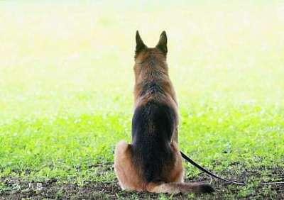 ペットが亡くなった悲しみをどう乗り越えましたか?