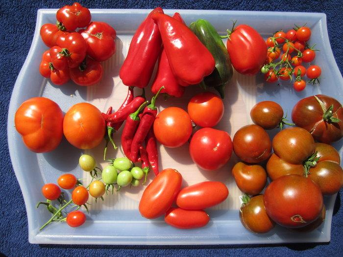 tomatenpassata selber machen heute gibts. Black Bedroom Furniture Sets. Home Design Ideas