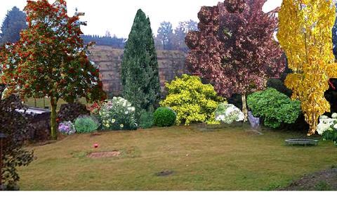 sichtschutz pflanze schnell wachsend - boisholz, Garten und bauen