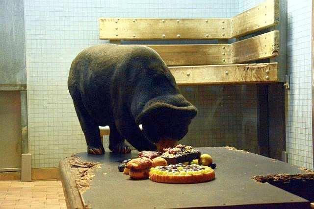 Nachmittags und Abendstimmung am Sonntag im Zoo Berlin
