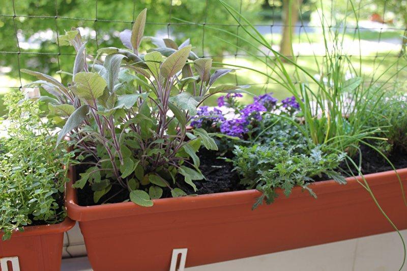 Ungiftige Balkonpflanzen Und Blumen Katzen Forum