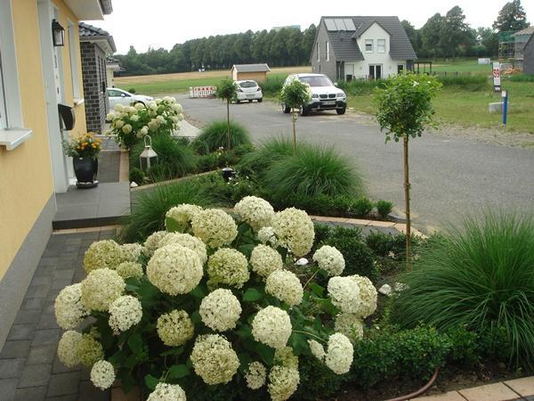 vorgarten modern graser performal garten und bauen - boisholz, Gartenarbeit ideen