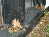 Morsches holz reparieren  Wrmedmmung der Wnde, Malerei