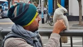 Diego fez uma nova amiga em Melbourne, o nome dela é Spirit e ela apaixonou-se por ele.