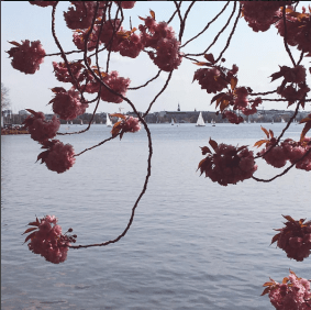 The banks of the Alster