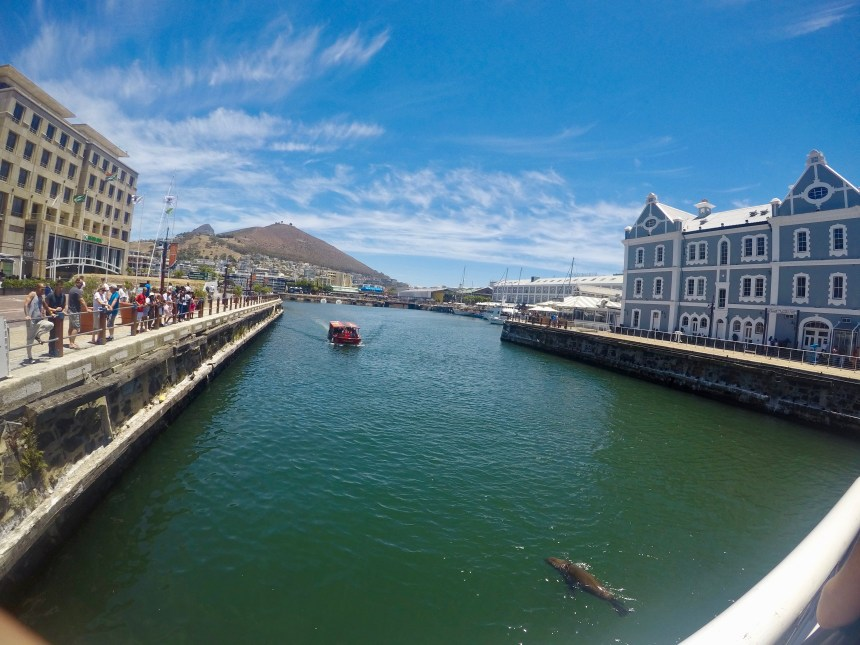 Things to do in Cape Town, South Africa