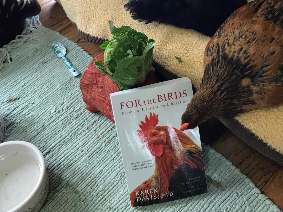 Chicken Run Rescue Photo Contest: For the Birds!