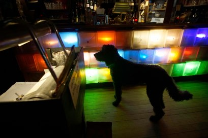 Patterson, owner Daniel Osman's poodle, is allowed to wander in the Dream Away Lodge. Photo: Ben Garver