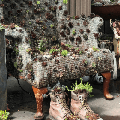 Fun Upcycles for Succulents – Our Top 10