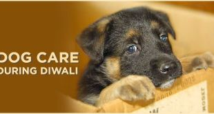 protect-dogs-and-pets-during-diwali-fireworks