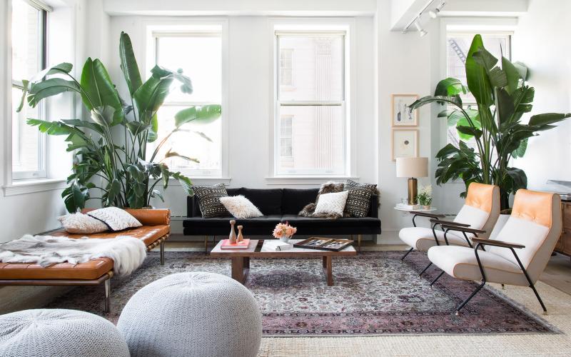 Ini Jenis Tanaman yang Cocok untuk Mempercantik Apartemen!
