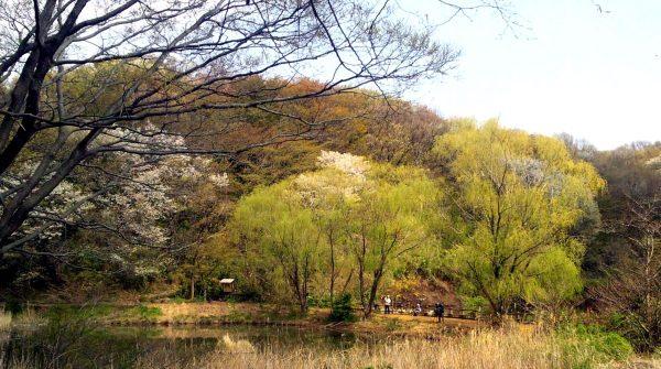 舞岡公園2
