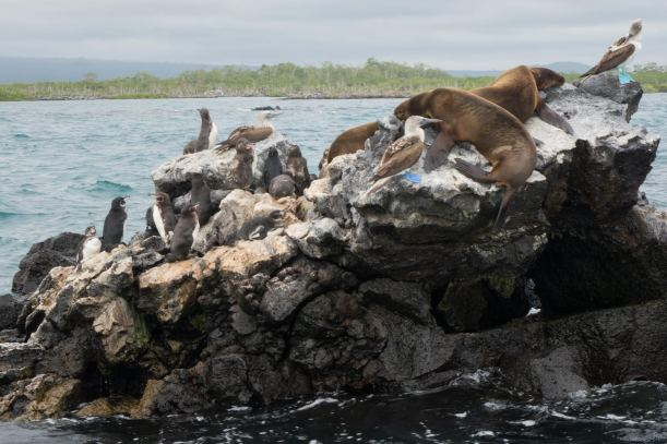 Real Redemptions, The Galapagos Islands