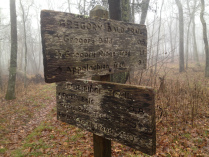 gregory-bald-sign-2