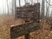 gregory-bald-sign-6