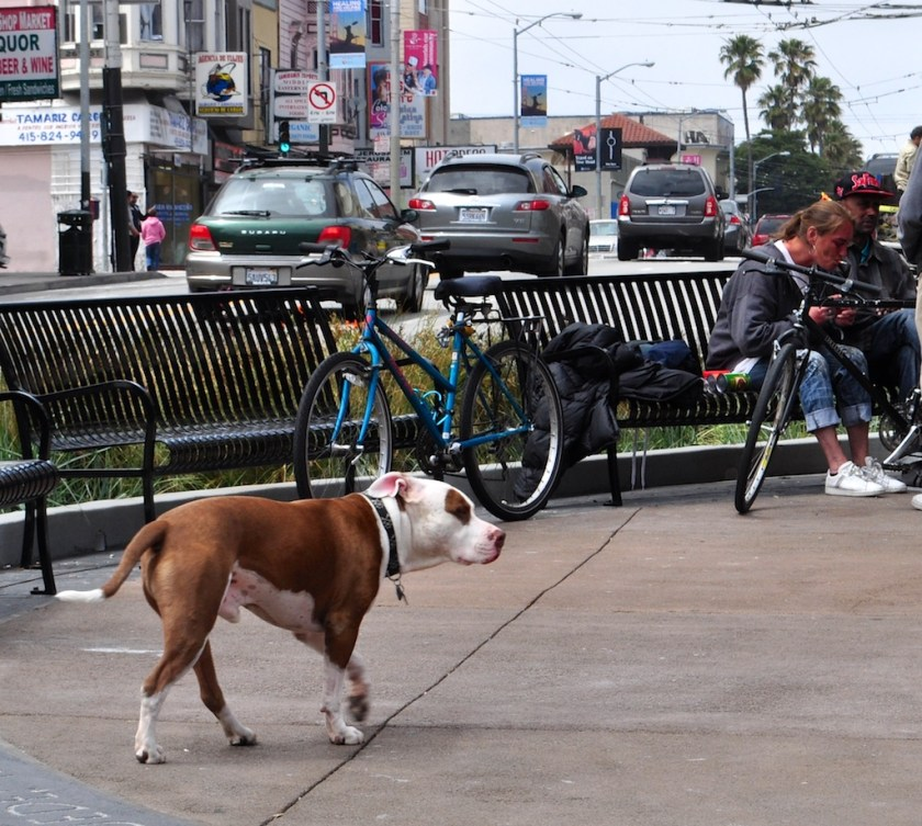 Off-leash in the Mission