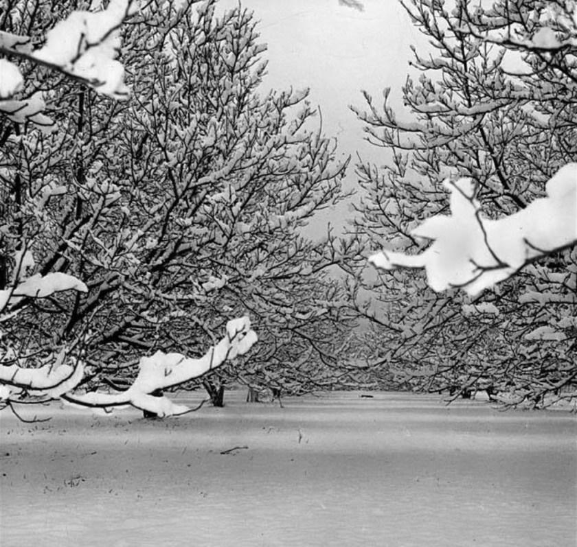Snow, Van Nuys, 1949