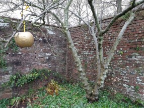 Golden apple and knobbly trunk
