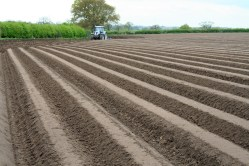 Potato sowing in Cheshire, April 2014