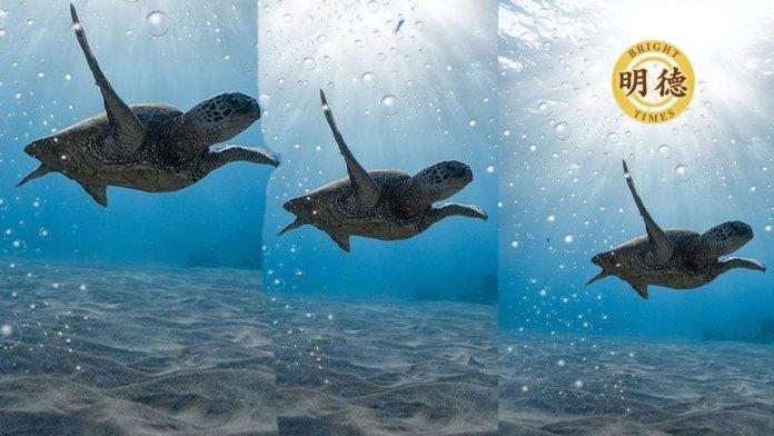 海龟完成了看似不可能的旅程,这要归功于一条穿越太平洋的隐藏