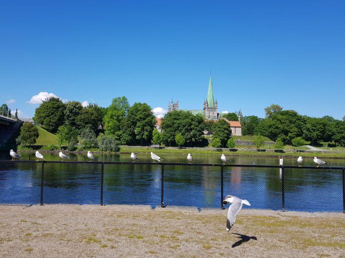 每年的六月是挪威特隆赫姆 Trondheim 最美的季节