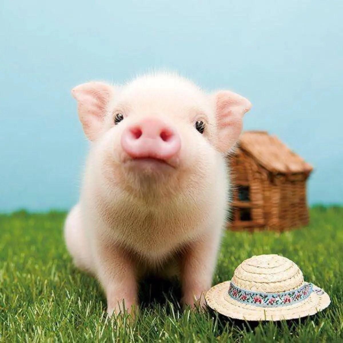 豬肉漲價的啟示 - 簡書