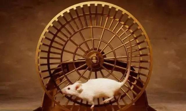 老鼠跑圈 - 簡書