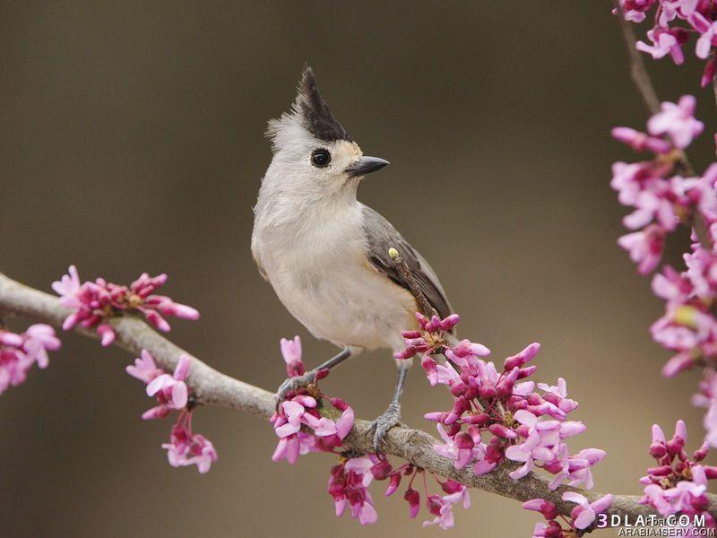 أجمل صور الطيور صور طيور جميله ريموووو