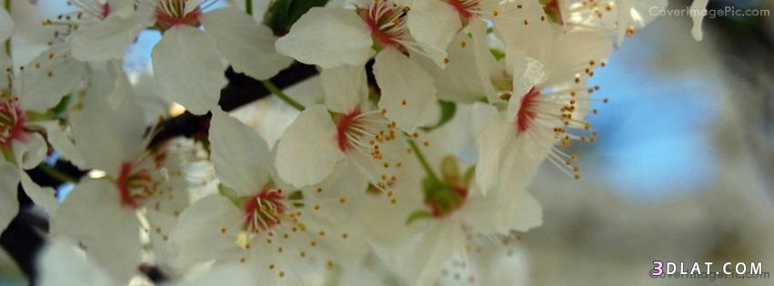 أغلفة فيس بوك ورود رومانسية 2020كفرات فيس زهور وورود طبيعية