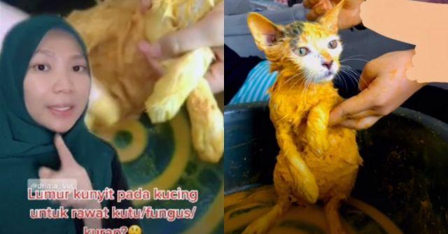rawatan kunyit pada kucing