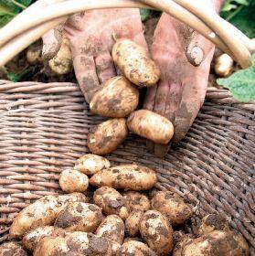 JRC boosts yields with fertiliser switch