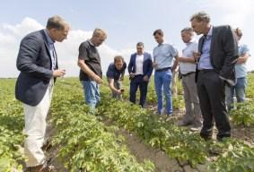 Image result for Albert Heijn: wild about potato sustainability