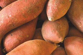 Sweet potato demand soars in Europe