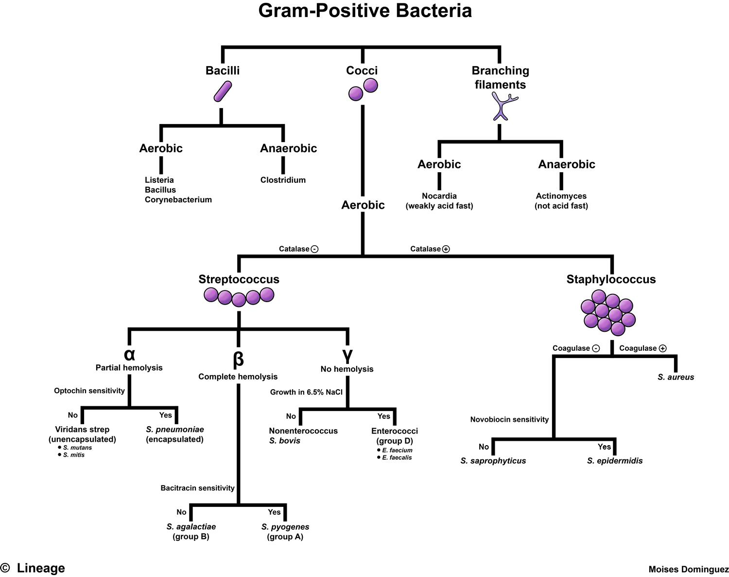 hight resolution of bacillus anthracis