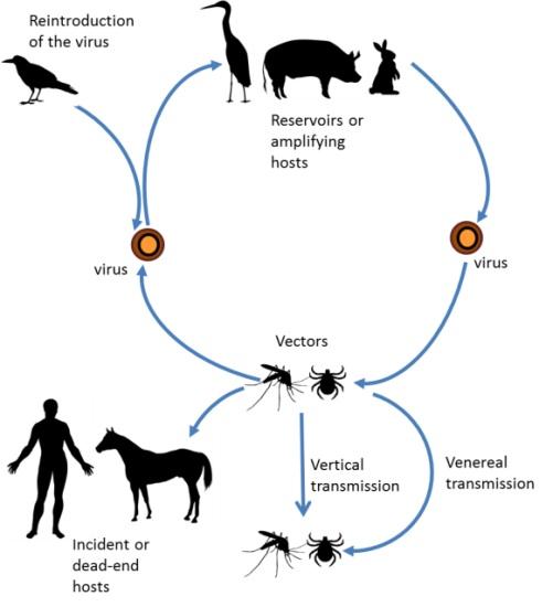 Arboviruses  Microbiology  Medbullets Step 1
