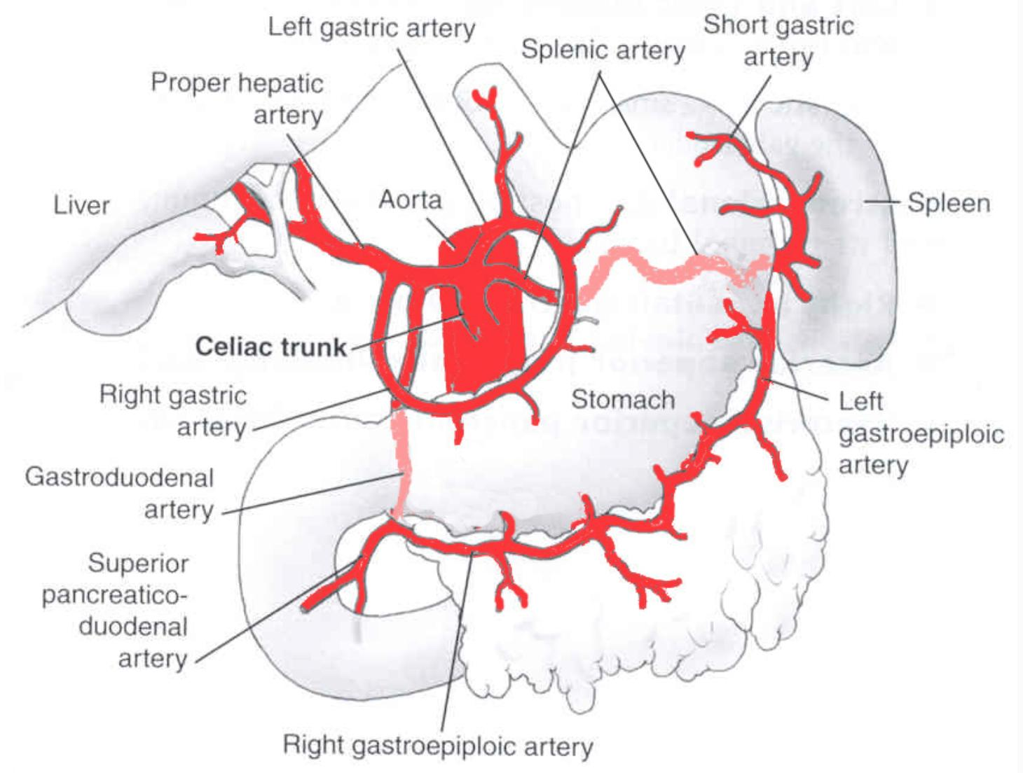 gastric bypass diagram vga to component wiring celiac trunk gastrointestinal medbullets step 1