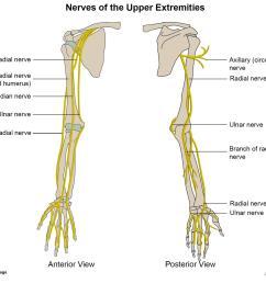 upper extremity nerves [ 1500 x 1311 Pixel ]