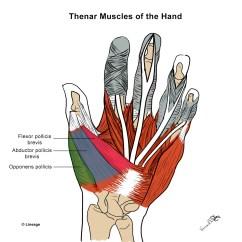 Muscle Diagram Anterior Hand 2005 Chrysler 300 Starter Wiring Intrinsic Muscles Msk Medbullets Step 1
