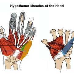 Palmar Hand Muscle Anatomy Diagram Rockford Fosgate Speaker Wiring Electrical Intrinsic Muscles Msk Medbullets Step 1