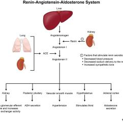 Urinary System Diagram And Functions Emg 81 85 Wiring 1 Volume Tone Renin-angiotensin-aldosterone - Renal Medbullets Step