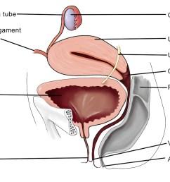 female reproductive anatomy [ 1282 x 909 Pixel ]