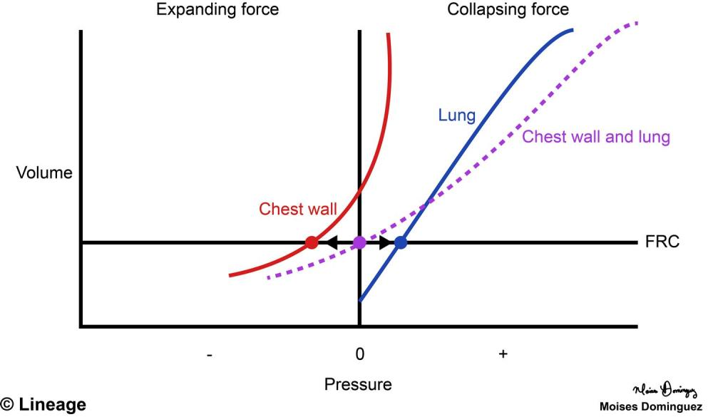 medium resolution of pressure volume curve respiratory medbullets step 1 chemisrty pec diagram thoracic anatomy diagram
