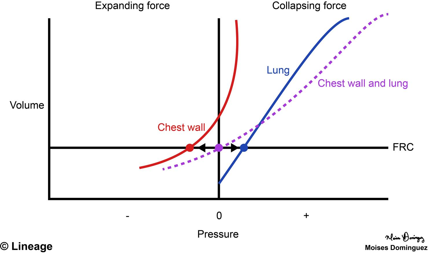 hight resolution of pressure volume curve respiratory medbullets step 1 chemisrty pec diagram thoracic anatomy diagram