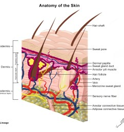 skin anatomy and wound healing [ 1381 x 1240 Pixel ]
