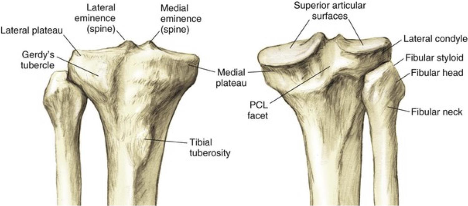 hight resolution of anterior posterior view