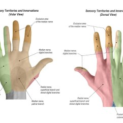 Hand Nerves Diagram Electrical Panel Knockout Sizes Physical Exam Of The Orthobullets Sensation Sensory Territories And Innervations